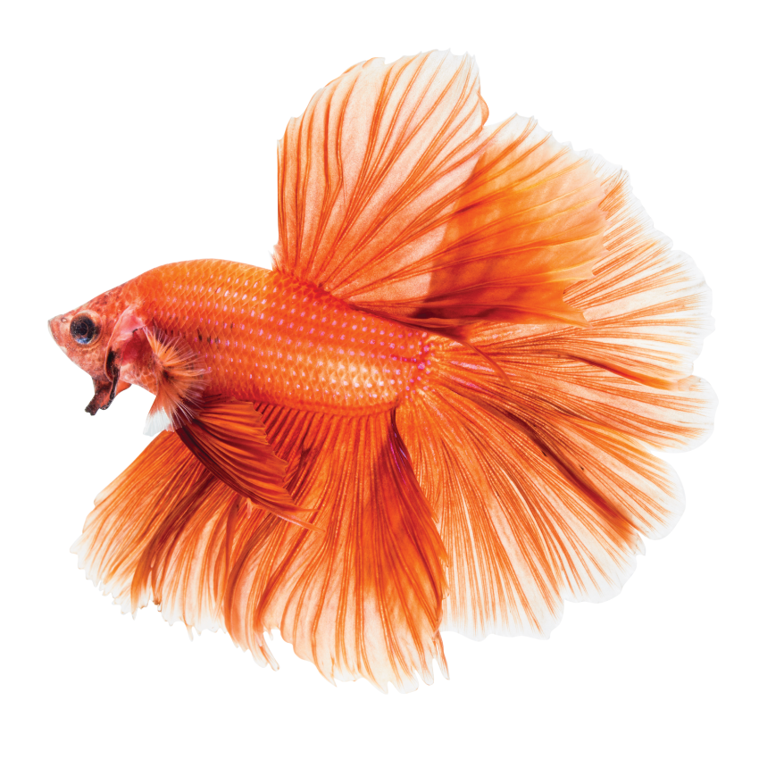Zdrowie i kondycja ryb