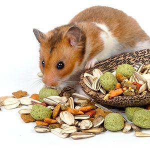 Karmy i smakołyki dla gryzoni