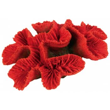 Dekoracja koralowiec średni