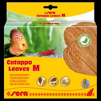 Catappa Leaves liście migdałecznika M 10 szt.