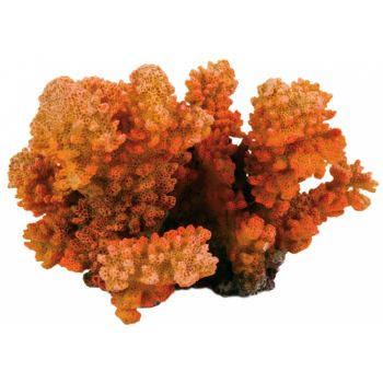 Dekoracja koral