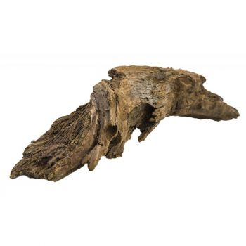 Korzeń mangrowca L 48-53 cm