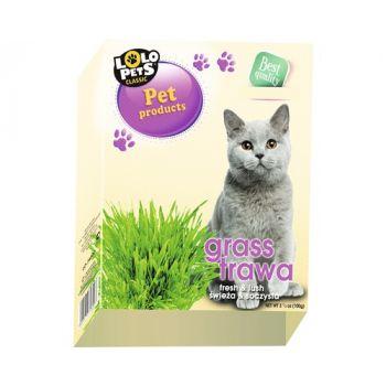 Trawa dla kota w kartoniku 100 g