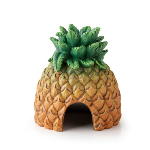 Ananas kryjówka dla gadów