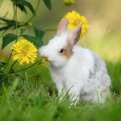 Wybiegi dla małych zwierząt