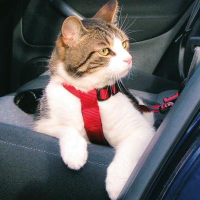 Jak transportować kota?