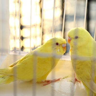 Klatki dla ptaków