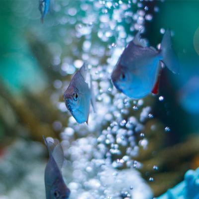 Napowietrzanie wody w akwarium